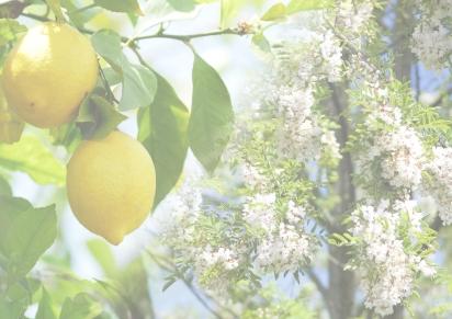 Spring 2017 – Lemon & AcaciaBlossom
