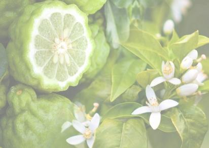 Summer 2017 – Bergamot & OrangeBlossom
