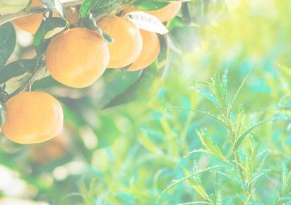 Summer 2017 – Mandarin &Tarragon