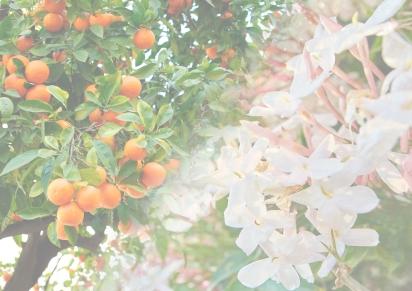 Autumn 2017 – Bitter Orange &Jasmine