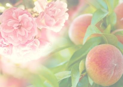 Autumn 2017 – Rose & PeachNectar