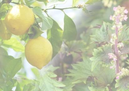 Spring 2018 – Lemon & Shisoleaf