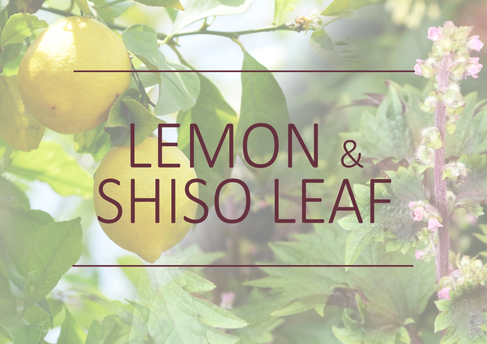 Fragrance trends - Spring 2018 - Lemon and shiso leaf
