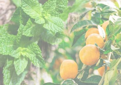 Spring 2018 – Mint & Tangerineleaf
