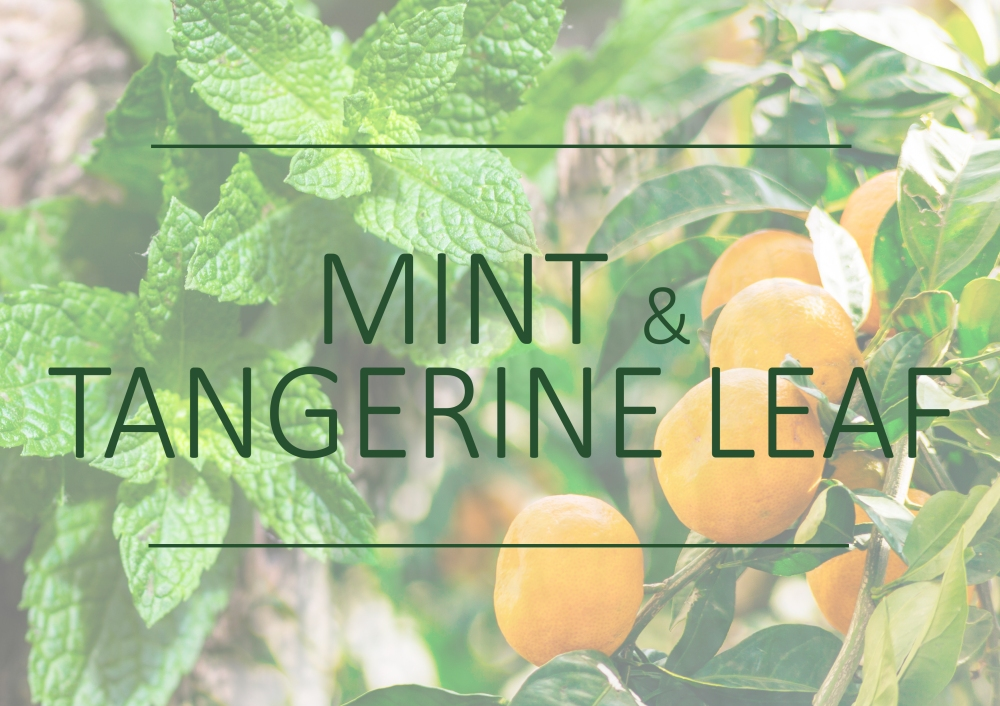 Fragrance trends - Spring 2018 - Mint and tangerine leaf