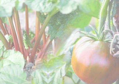 Spring 2018 – Rhubarb & Tomatoleaf