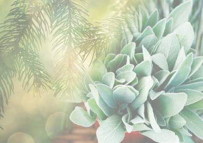 Summer 2018 – Pine &Sage