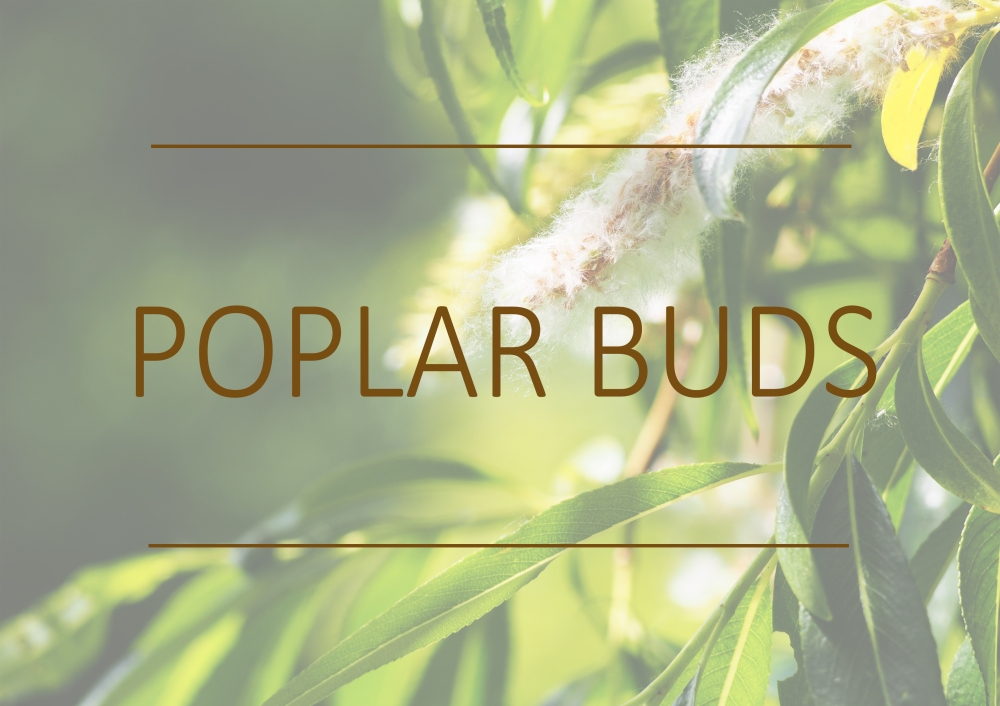 Fragrance trends - Summer 2018 - Poplar buds