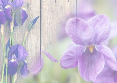 Autumn 2018 – Iris &Violet