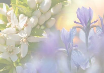 Autumn 2018 – Orange Blossom &Iris