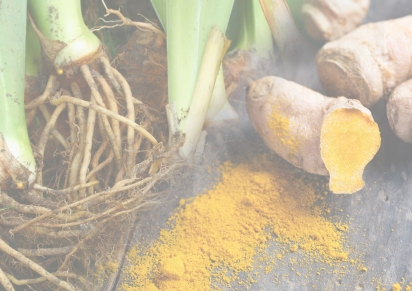 Autumn 2018 – Orris Root & Turmeric