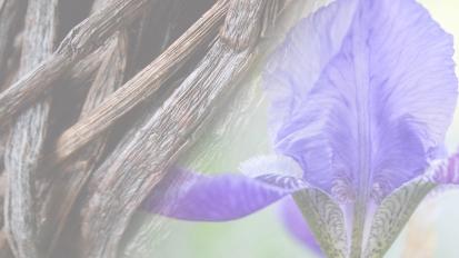 Winter 2018 – Vanilla &Iris