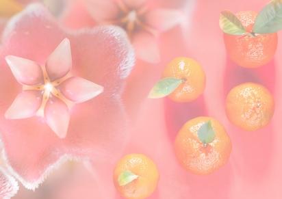 Spring 2019 – Orchid &Mandarin