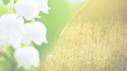 Summer 2019 – Herbs & Lily of theValley