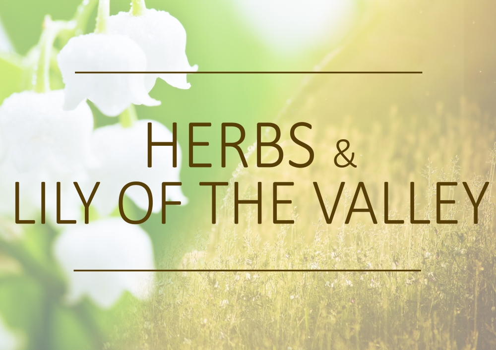 Fragrance trends - Summer 2019 - Herbs and lily of the valley