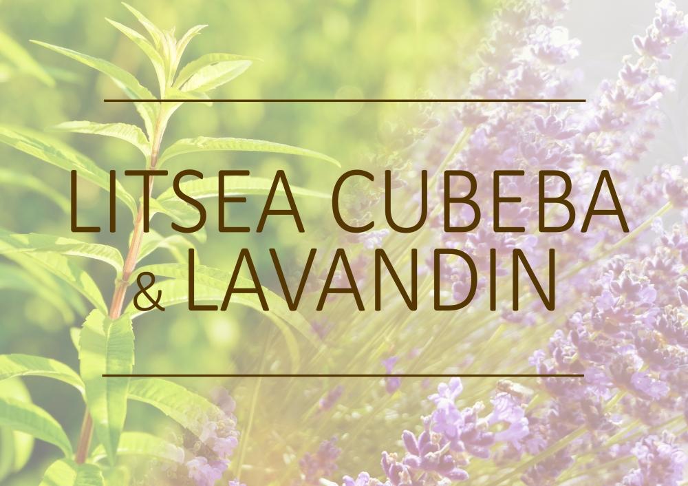 Fragrance trends - Summer 2019 - Litsea cubeba and lavandin