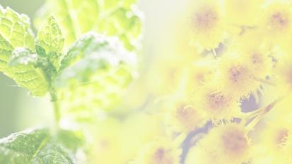 Summer 2019 – Mint &Mimosa