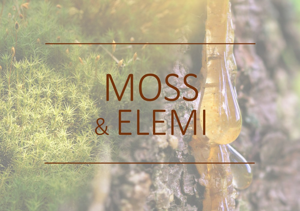 Fragrance trends - Moss and Elemi