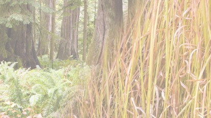 Autumn 2019 – Woods &Vetiver