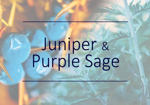 Fragrance trends - Juniper and purple sage