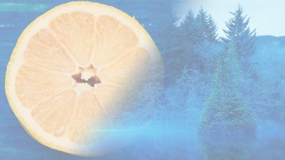 Spring 2020 – Mediterranean Lemon &Cedarwood