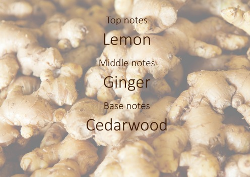 Fragrance trends - Ginger pyramid