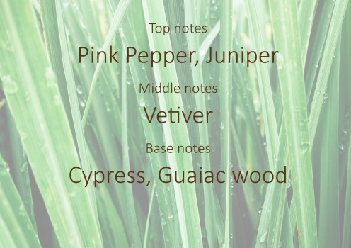 Fragrance trends - Vetiver pyramid