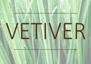Fragrance trends - Vetiver